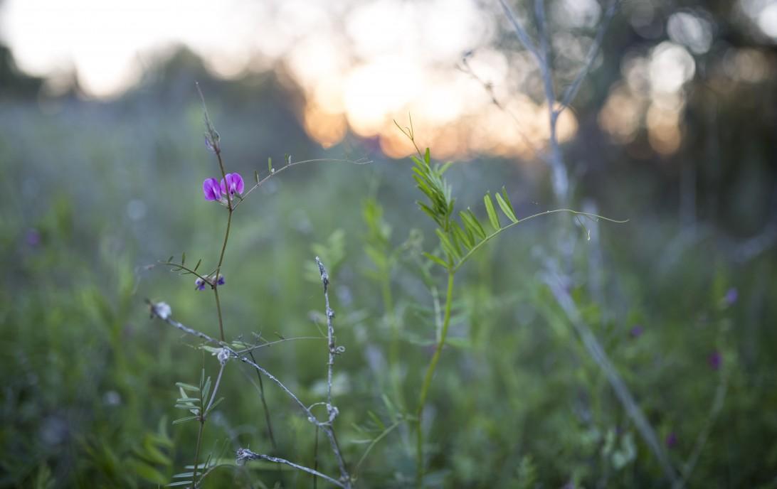cropped-forest-northern-california-tahoe-wildflower_3.jpg